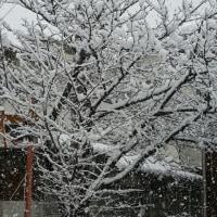 やはり雪が❗