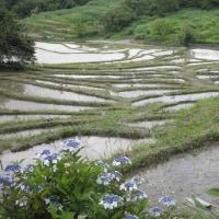 静岡県の棚田  (くまりん)