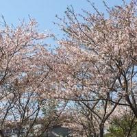 春爛漫(^^)