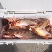 2月26日(日)オキメバル五目の釣果