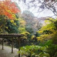 三四郎池の紅葉具合(2016年12月)