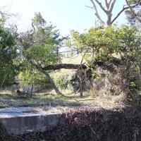 東京湾要塞 富津元洲堡塁砲台5