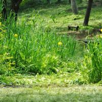 琵琶湖の今津浜、新緑爽やかで、さざ波寄せるやさしい浜辺(6)・・・奥琵琶湖・滋賀県高島市今津町