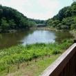 暑い中、泉の森9km