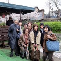 十石舟で桜見物 ( 京都伏見)