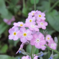 お花キレイでちゅ(⋈◍>◡<◍)。✧♡その4