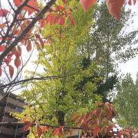 学校の秋の七草