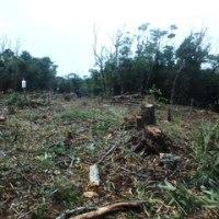 H地区で進む伐採による森の破壊。