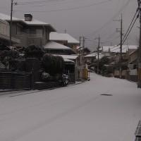 雪がふったよ~♪♪