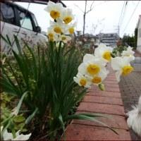 冬の住宅街花ウォッチング