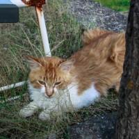 屋島の猫さん