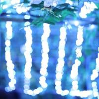 グリーンパークの薔薇 7 (ライトアップ)