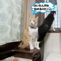 ちゃぶ台嬉ちいでしゅ(=^・・^=)