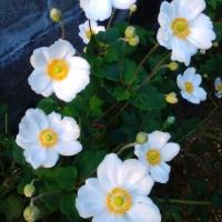 10月22日の花