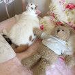 猫のユキちゃんと、クマのぬいぐるみ