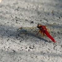 里山の虫たち続く・・・