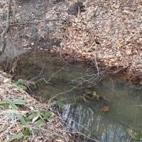 川沿い以外にもアライグマの足跡