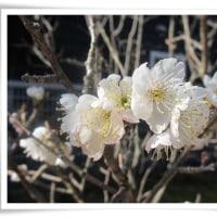 春がくる ♪