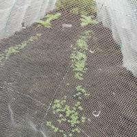 菜園に野菜がイッパイ芽を出した