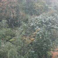 初雪が降った!!