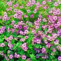 「名もない花」・環境・平和 Ⅱ