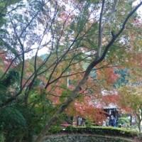 福岡での紅葉狩り! ~朝倉市 秋月城~