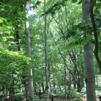 今日の散策、弘前公園内を散策