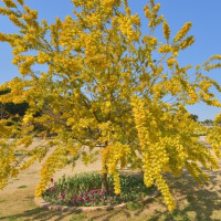 山陽メディアフラワーミュージアム 前庭の花木