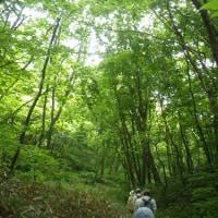 6月18日(日)苫小牧 近所の自然散歩~植物調査~の様子