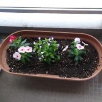 花を植えました