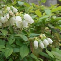 四月中ごろ 庭の花(つづき)