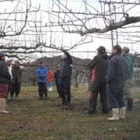 蔵王梨生産者が剪定技術を磨く
