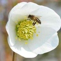 昨年庭に来た ハチ(蜂)