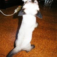 室内飼いのネコは外に出たくない!