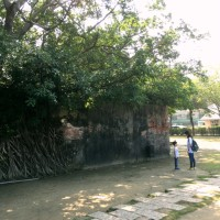 ジブリの樹〜安平樹屋