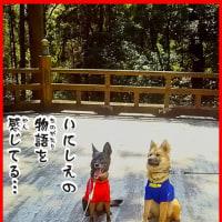 犬の文字 誘われたら 八犬伝/南総の旅1