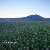 蕎麦畑~筑波山遠景 第4段