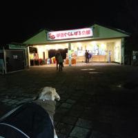 伊豆の河津桜2017②