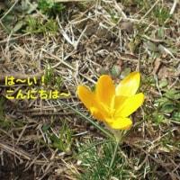 ♪ぽかぽか春がやって来た〜♪