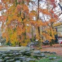 万博公園の秋