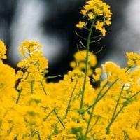 早春の色がどんどん春の濃い色に変わります。