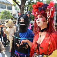 神楽坂・・「化け猫フェスティバル2016」