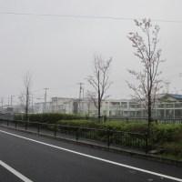 大柏川の桜 2017.04.09