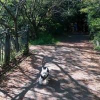新緑のお散歩🎵