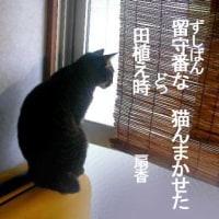 2016.6薩摩狂句