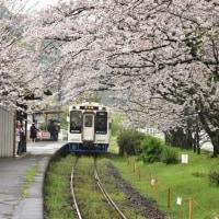 桜の駅1・・・【いな】