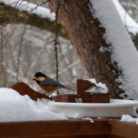 屋根からの落雪の音を聞きながら、終日焙煎する。