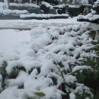 雪景色もいいね。