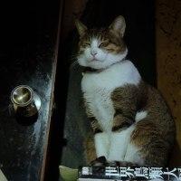 庭猫 368