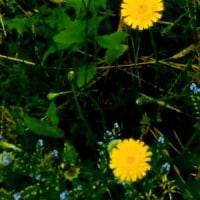 初夏?? 生い茂る雑草園 そして 膀胱